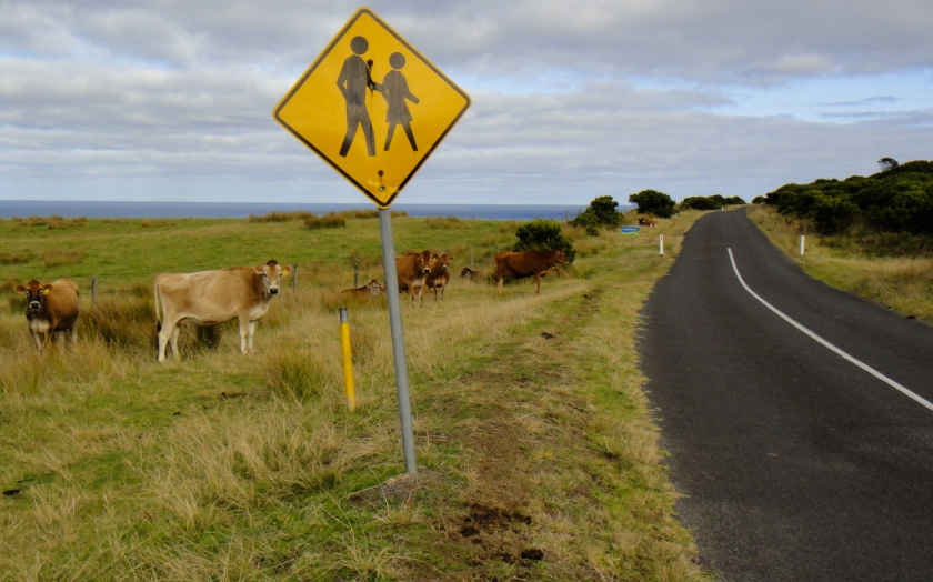 cows & walk sign