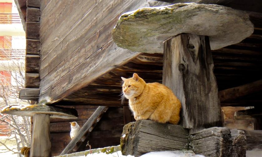 stone disc & cat