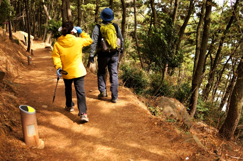 pine forest hikers