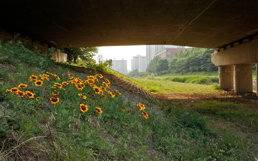 One of the numerous bridges & typical unkempt bank