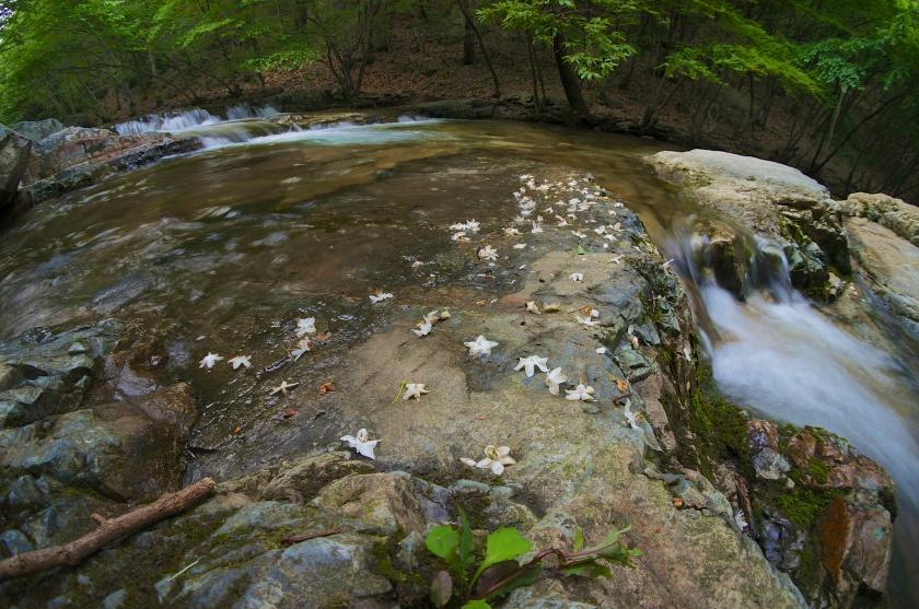 Beauty below the main falls