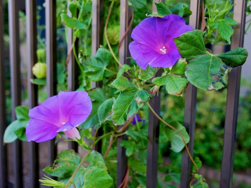 purple flowers tokyo