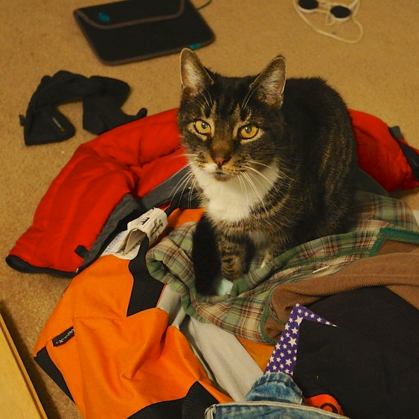 Moe quickly claimed my drifter's kit as his new bed.