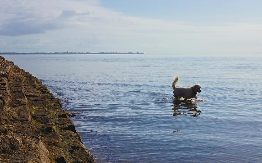 dog in water sandgate australia