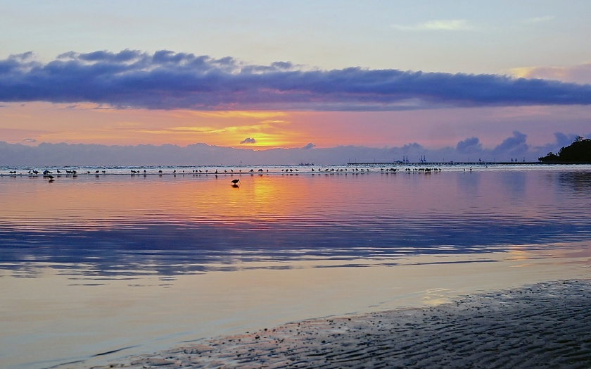 seabirds sandgate sunrise