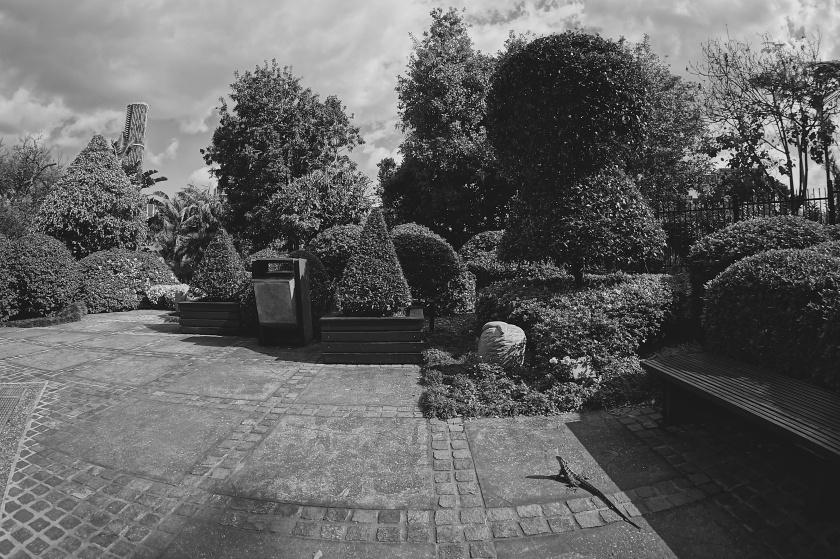 lizard & topiary