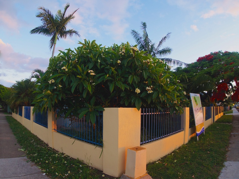 A frangipani at Shorncliffe, a few steps from Cabbage Tree Creek. Got a spare million bucks or so lying around? This place is for sale. Ocean views, handy to fish & chips, sweet frangipani tree. Bargain!