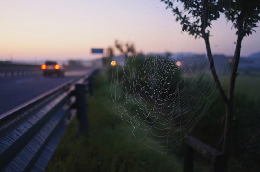 dawn spider web korea