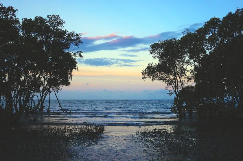 view of moreton bay through mangroves