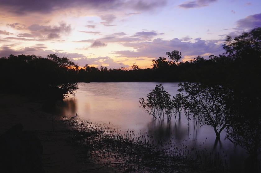 creek bank night