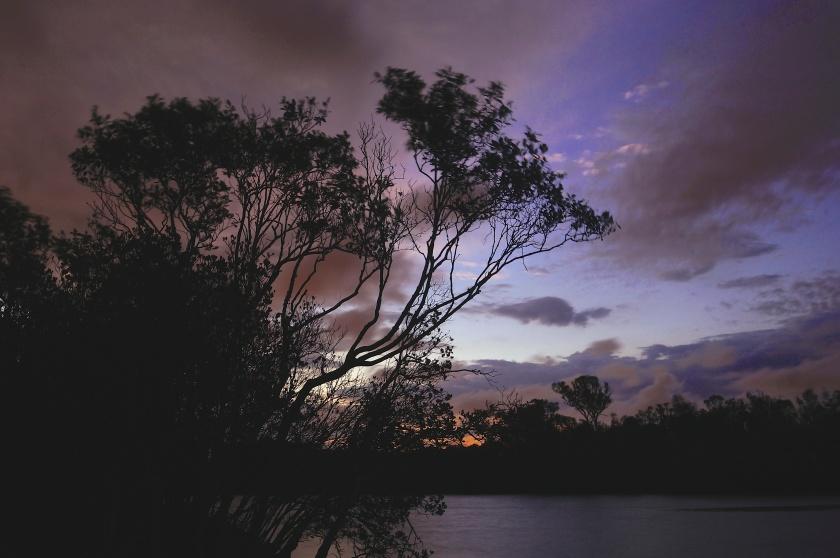 mangrove tree night nudgee creek