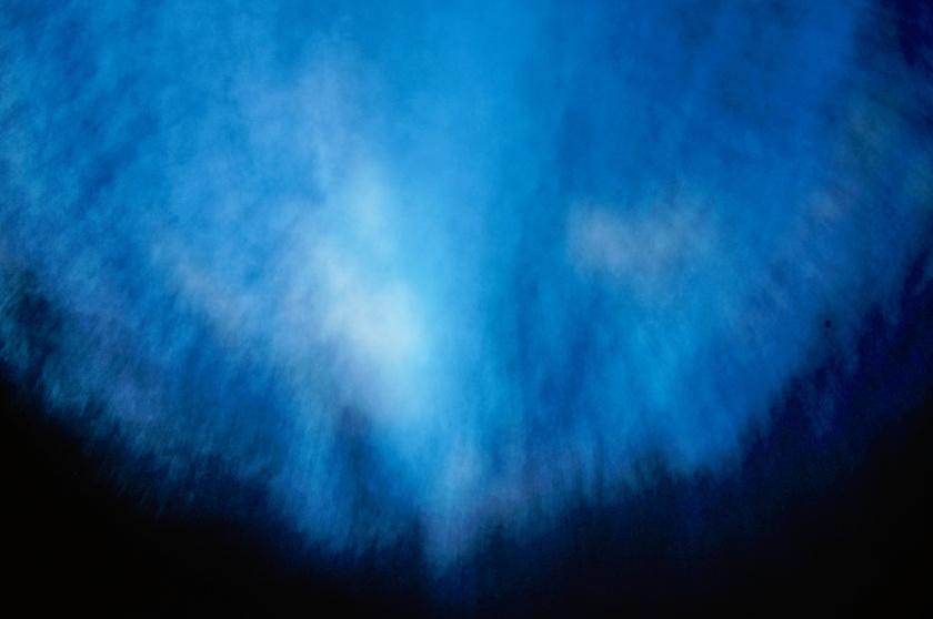 casuarina abstract 1