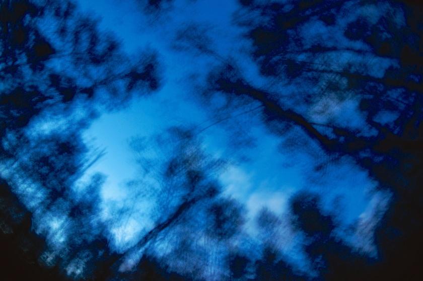 casuarina abstract 4