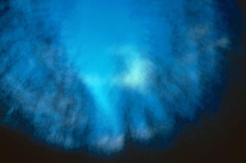casuarina abstract 3