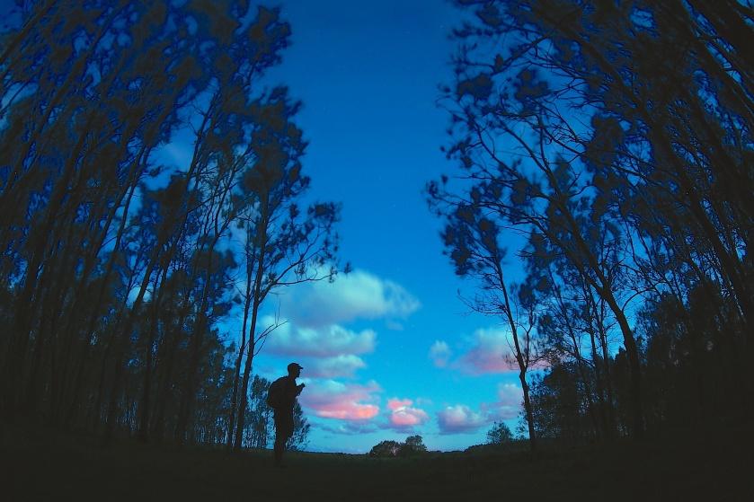 photographer & casuarinas dusk
