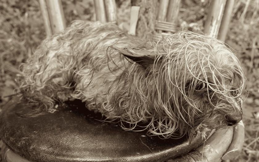 miserable stray dog korea