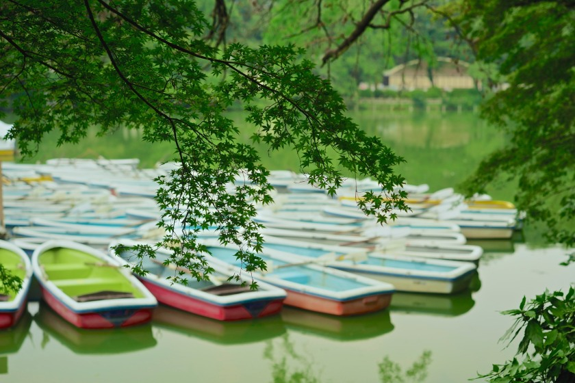 Rowboats & Maple Leaves, inokashira Pond.