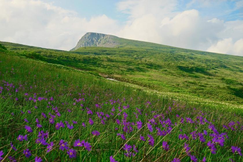 chubetsu-dake wildflowers