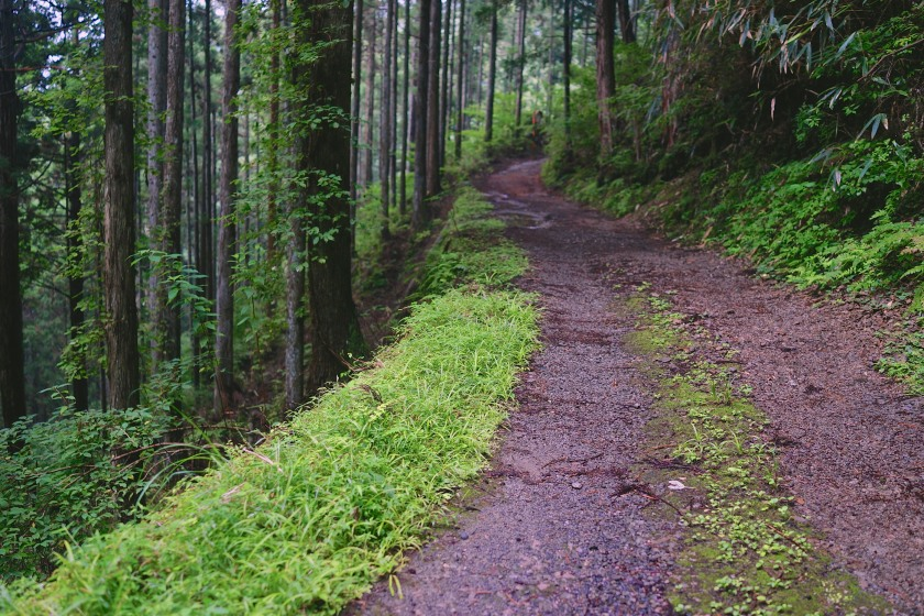 kumano kodo path