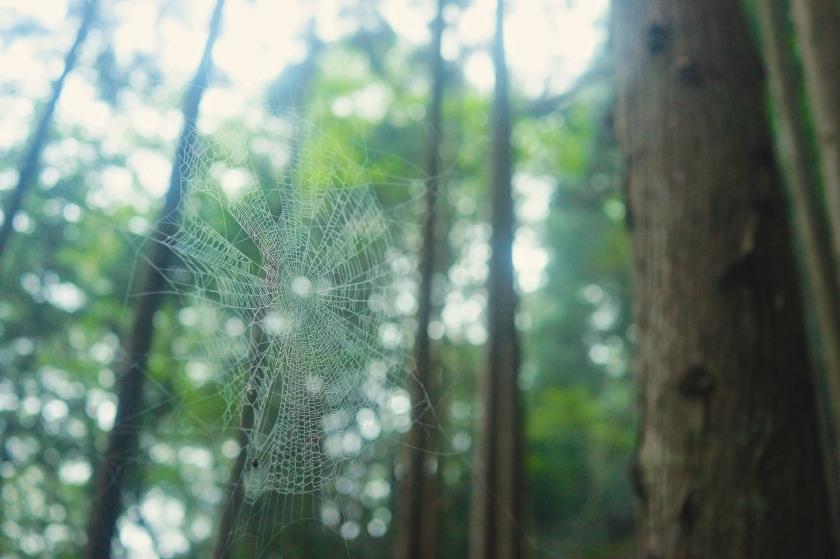 spider web kohechi