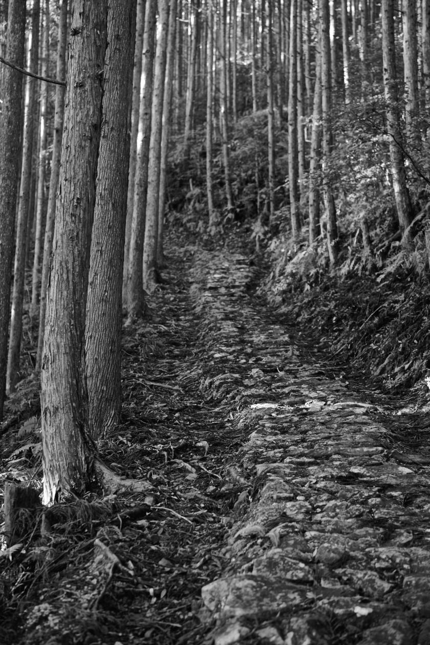 old path wakayama