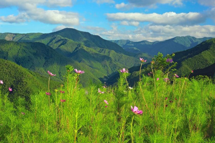 cosmos & mountain scenery kohechi