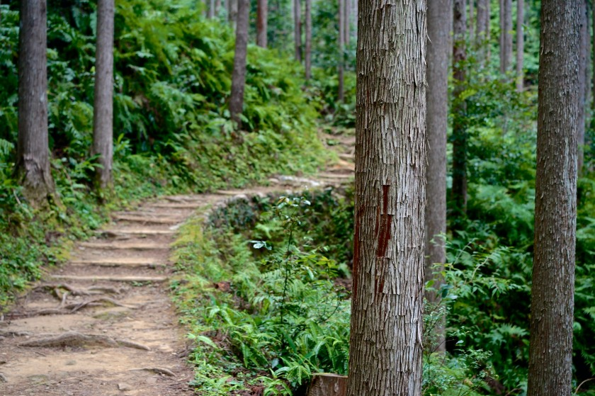 nakahechi trail