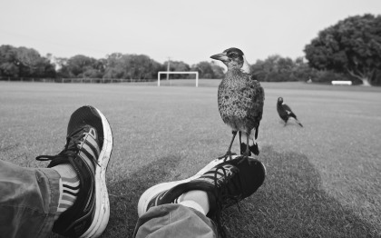 magpie standing on person's foot